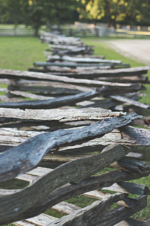 Kostenloses Stock Foto zu außerorts, bäume, brennhölzer, gras