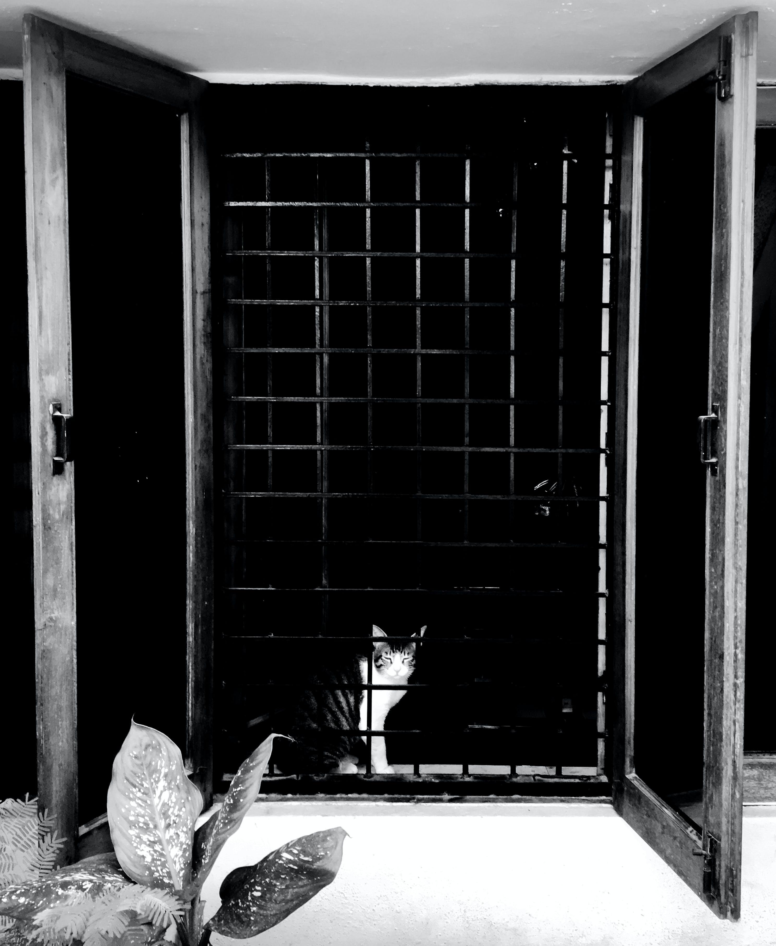 Foto d'estoc gratuïta de #gat