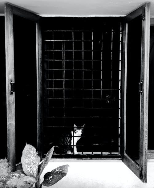 #ネコの無料の写真素材