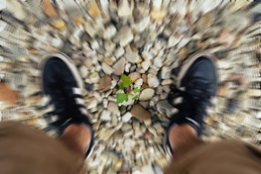 Free stock photo of plant, shoes, zoom
