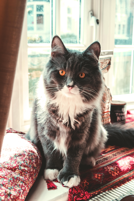 Biela mačička alebo čierna mačička