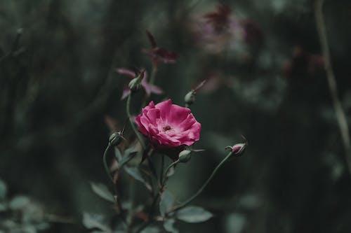 Fotobanka sbezplatnými fotkami na tému flóra, jasný, jemný, krásny