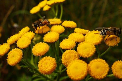 動物, 天性, 小, 授粉 的 免费素材照片