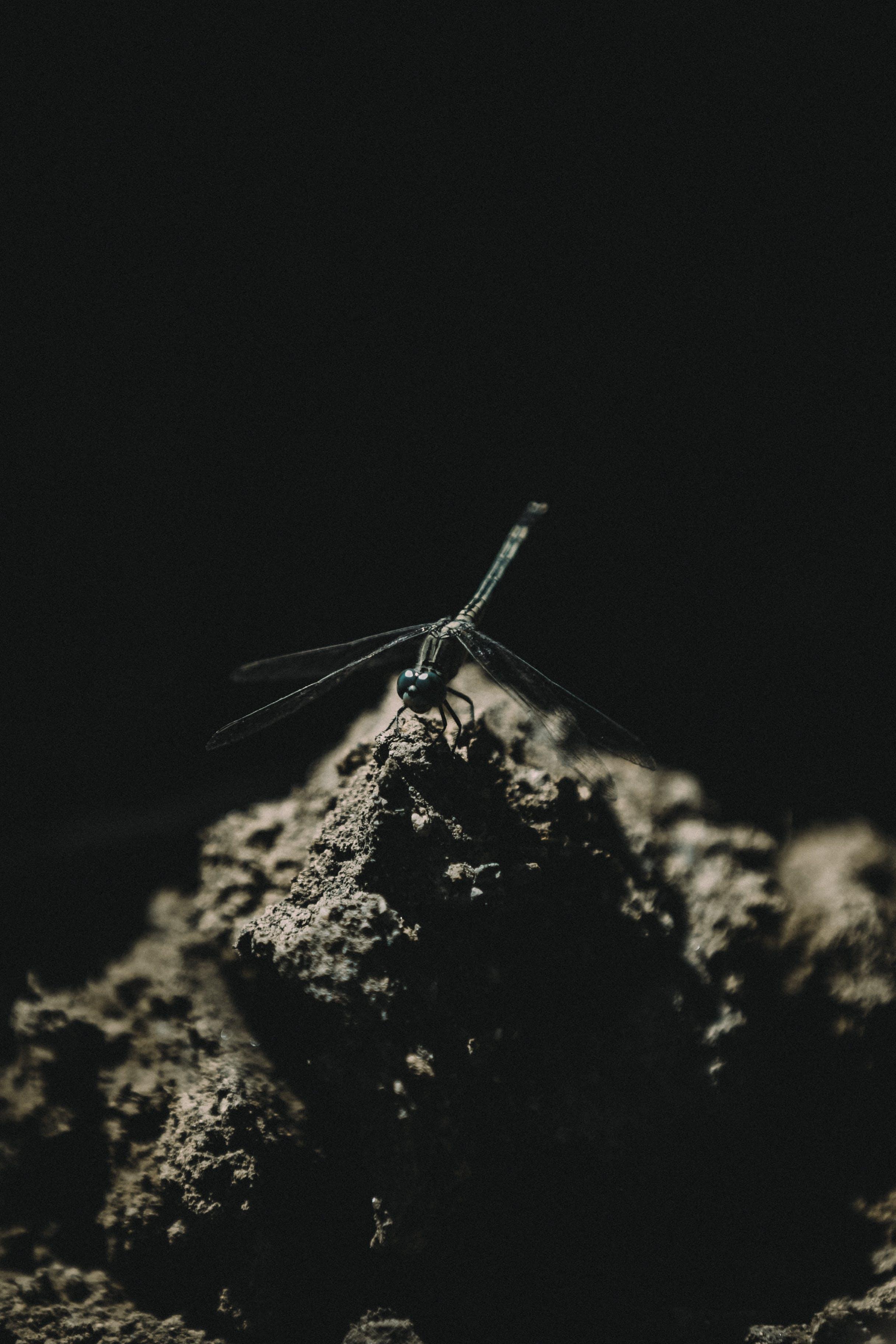 Imagine de stoc gratuită din alb-negru, fotografie monocromă, închis la culoare, insectă