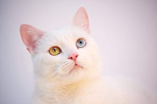 Shallow Focus Photography Of White Cat
