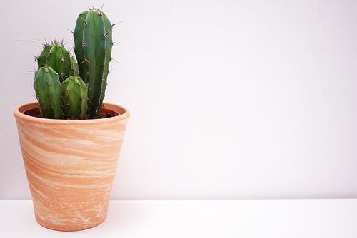 Cactus In Brown Vase