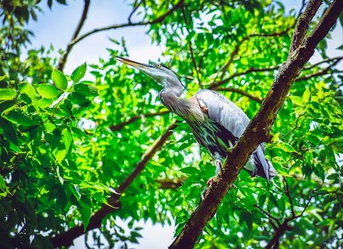 동물, 부리, 새, 새가 앉아 있는의 무료 스톡 사진