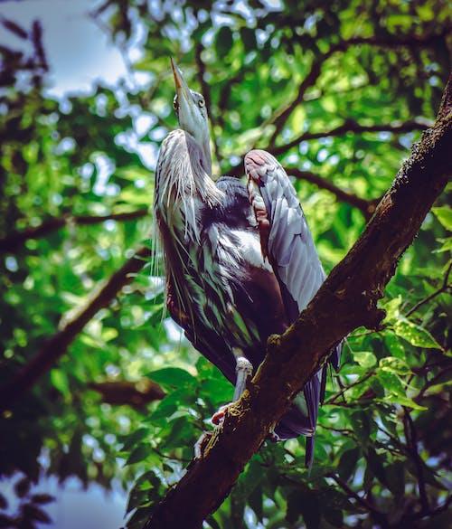 Gratis stockfoto met aviaire, beest, dieren in het wild, neergekomen