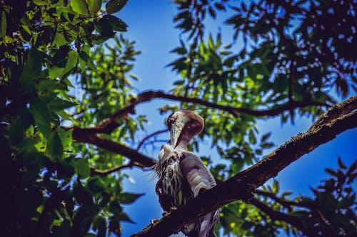Darmowe zdjęcie z galerii z drzewo, dzika przyroda, gałąź, pióra