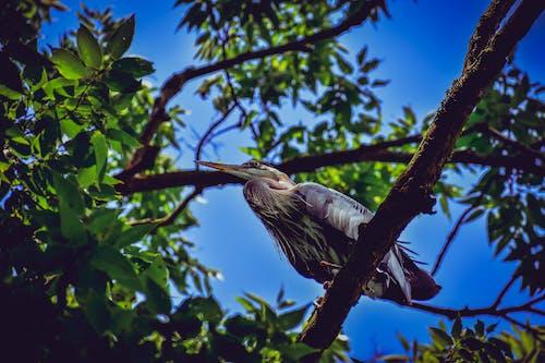 Darmowe zdjęcie z galerii z dzika przyroda, gałąź, siedzący na gałęzi, zwierzę