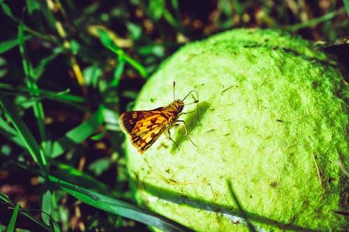 Fotobanka sbezplatnými fotkami na tému chrobák, guľa, hmyz, malý