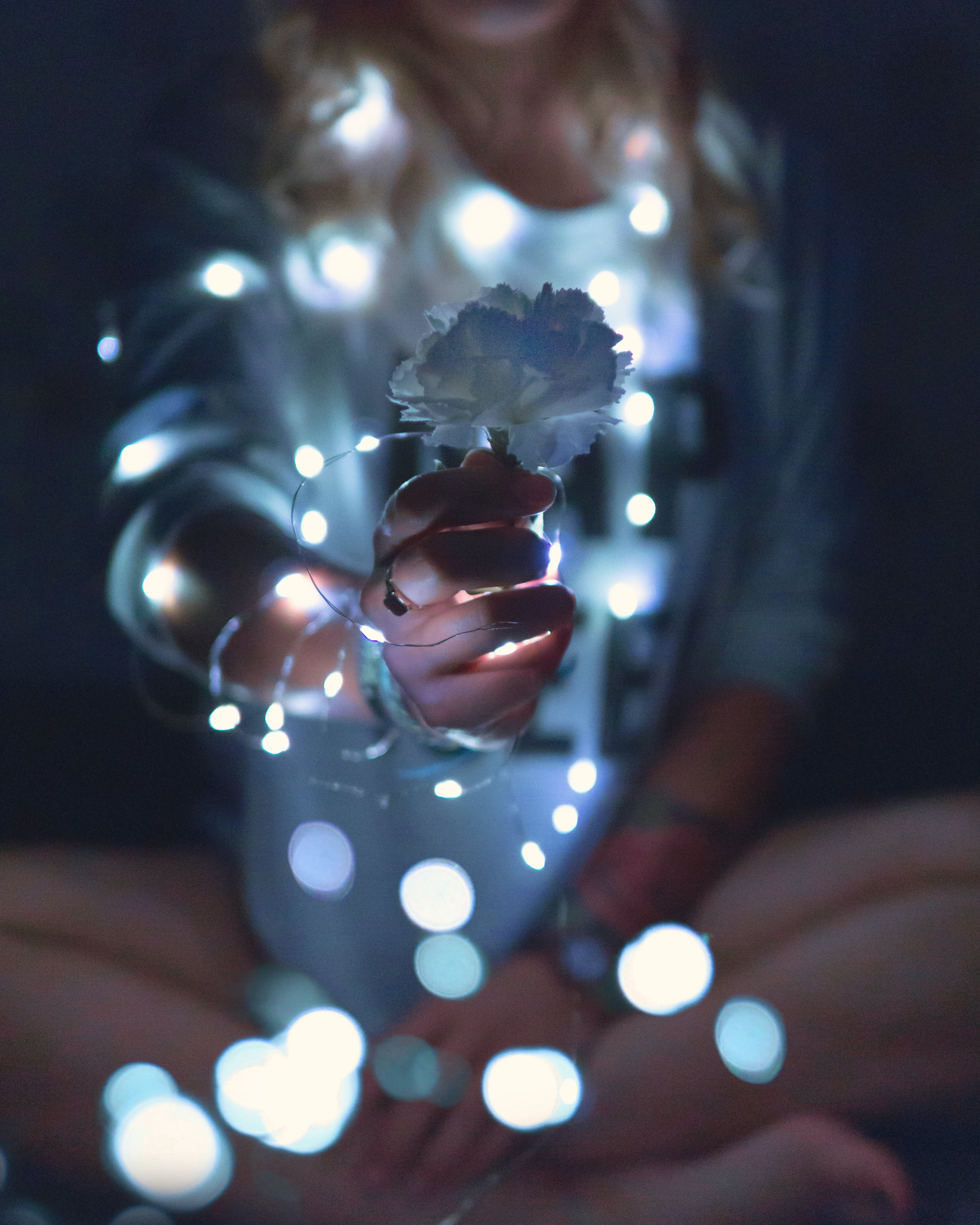 Person Holding Carnation Flower With String Lights