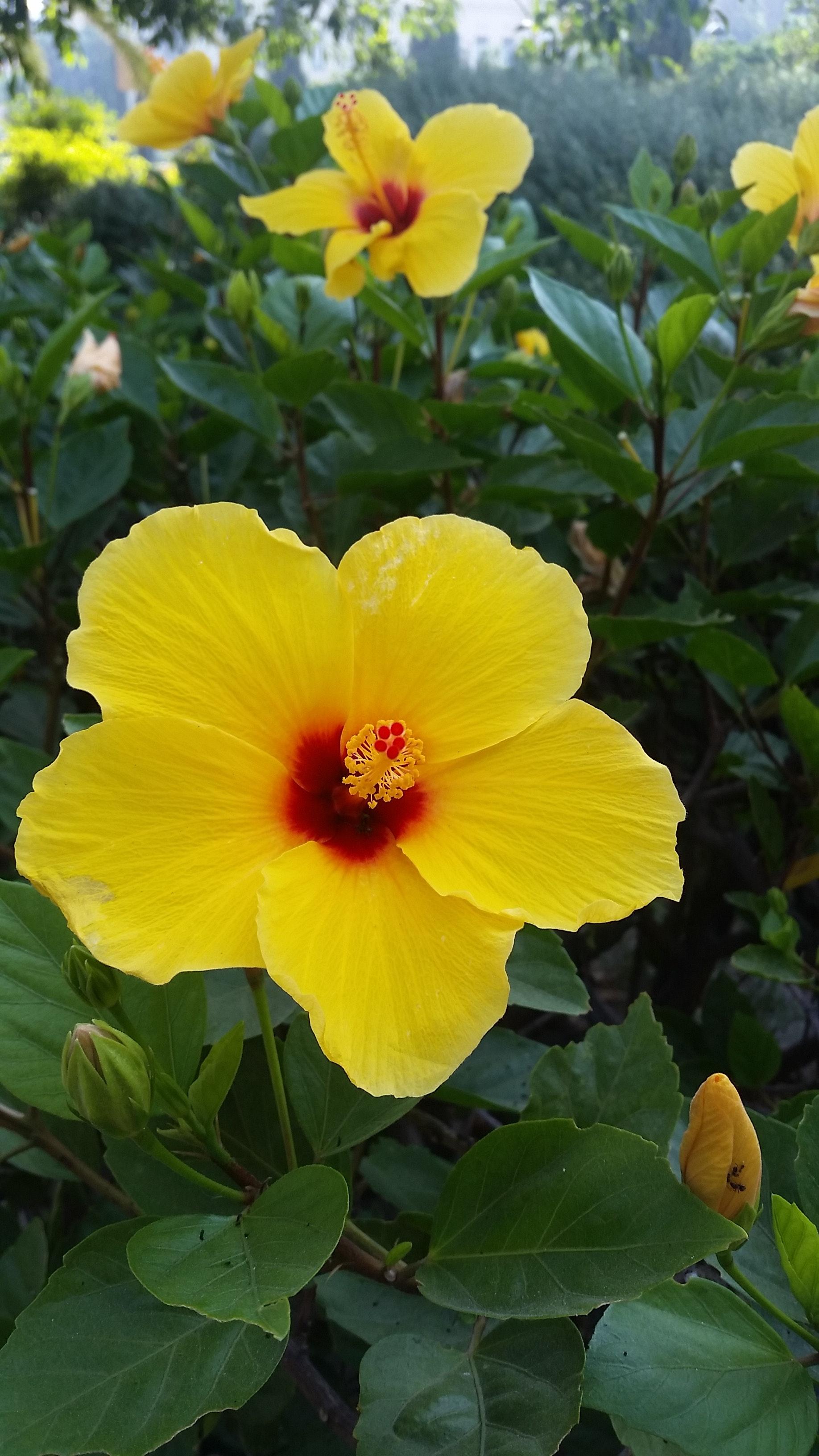 Free stock photo of beautiful flowers beauty flower free download izmirmasajfo