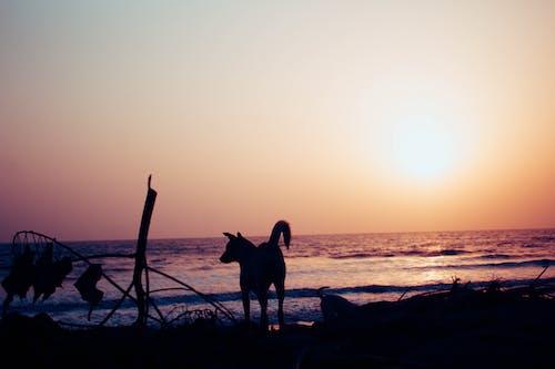 Fotobanka sbezplatnými fotkami na tému pes, západ slnka