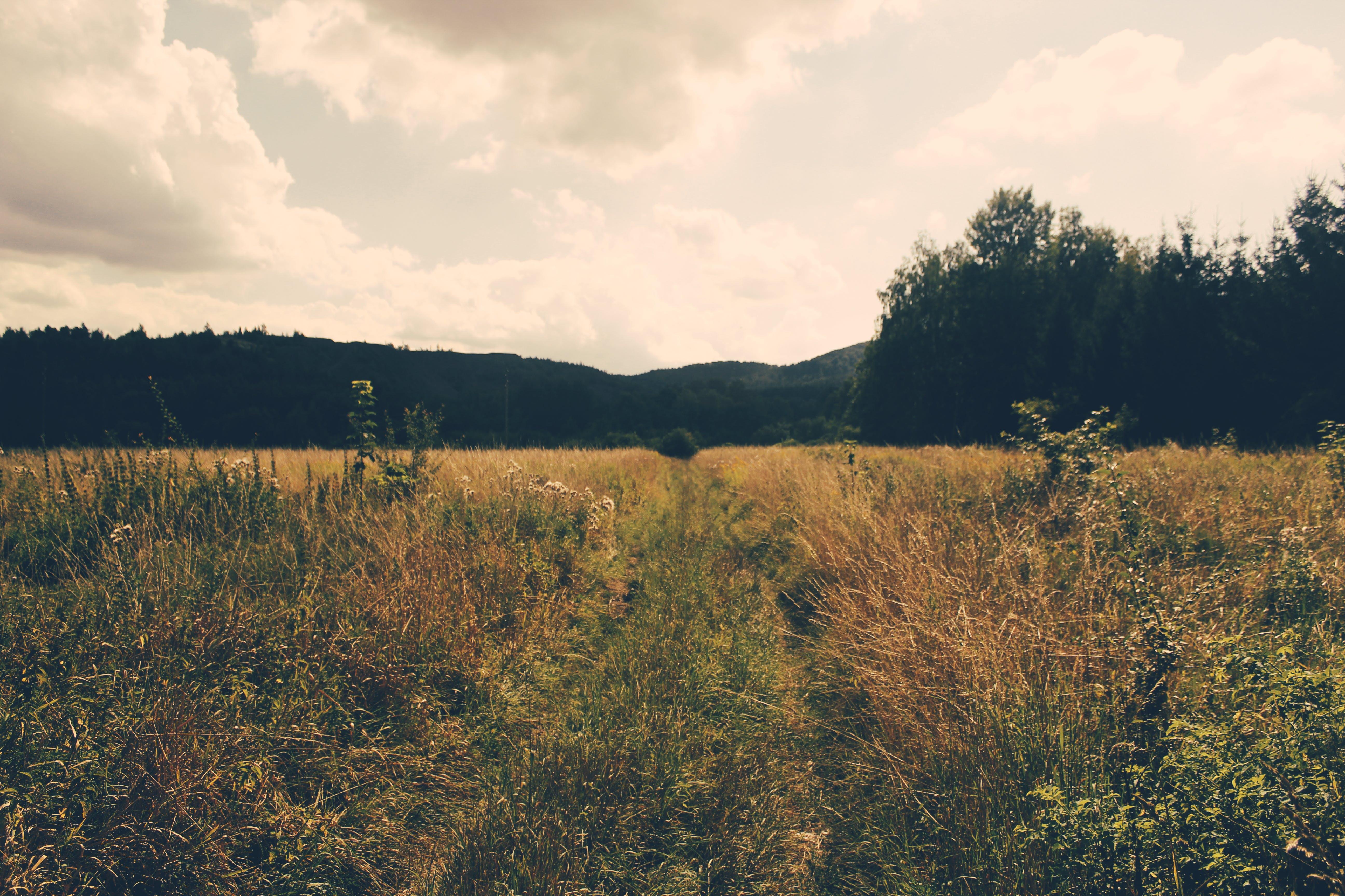 Fotobanka sbezplatnými fotkami na tému denné svetlo, hracie pole, mraky, obloha