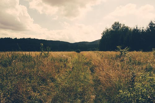 Foto stok gratis awan, bidang, lahan pertanian, langit
