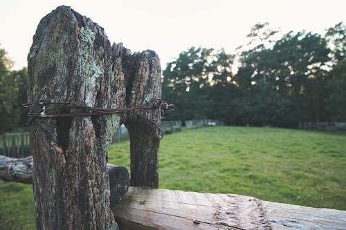 Gratis lagerfoto af gylden time, plankeværk