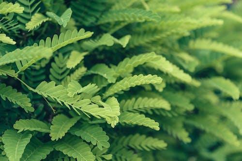 Kostenloses Stock Foto zu blätter, grün, pflanze, tiefenschärfe