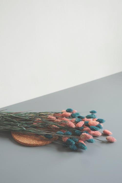 フラワーズ, 咲く, 工場, 花の無料の写真素材