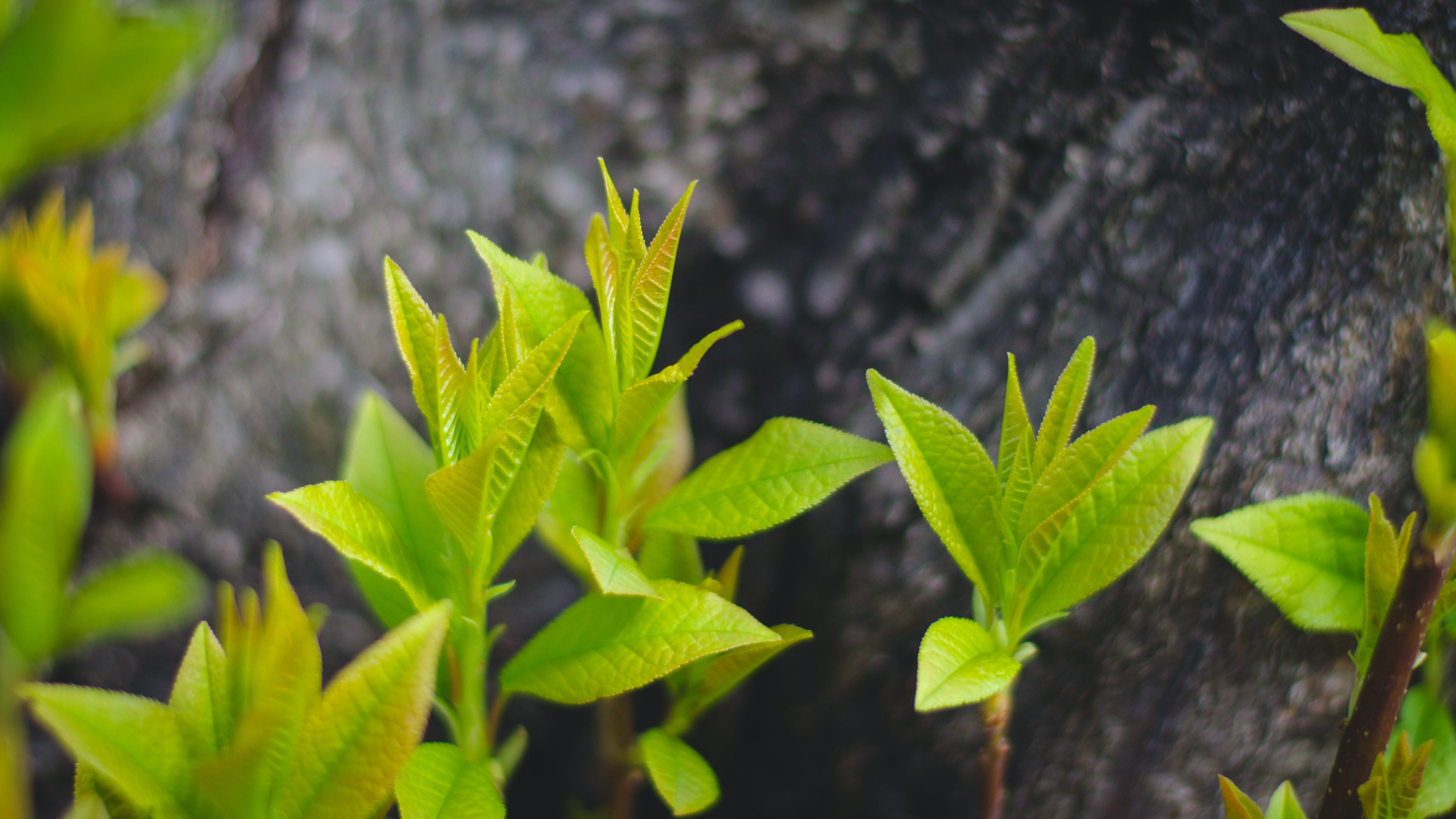 Free stock photo of дерево, зелень, листья, пень
