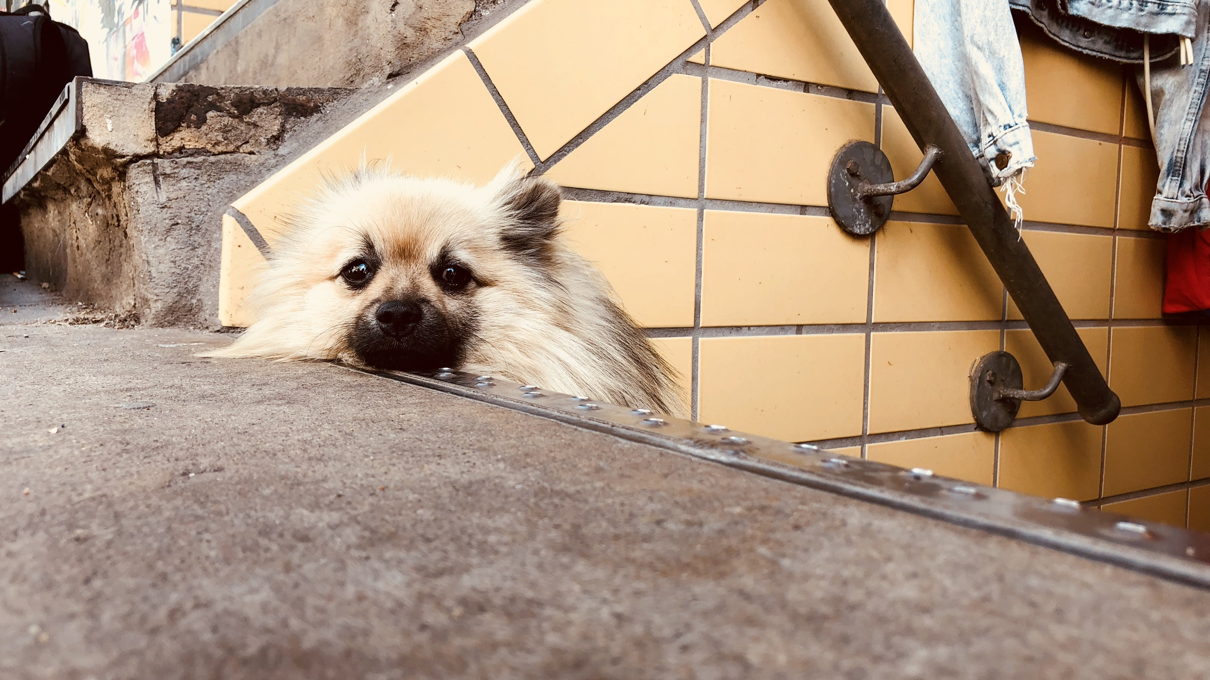Free stock photo of big city, dog, relaxation, stairs
