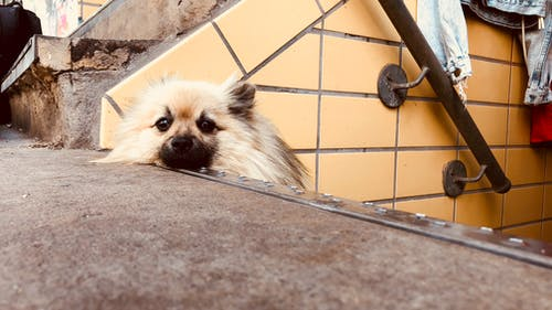 Free stock photo of dog, relaxation, stairs