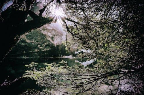 Δωρεάν στοκ φωτογραφιών με Ανατολή ηλίου, γραφικός, δέντρο, δίπλα στη λίμνη