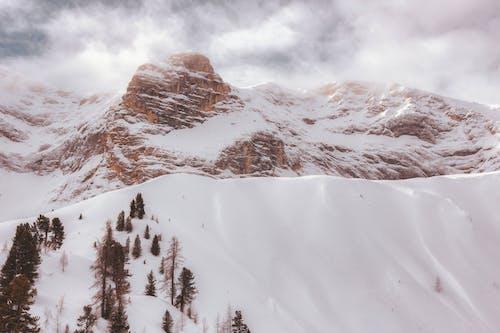 คลังภาพถ่ายฟรี ของ ตอนกลางวัน, ต้นไม้, น้ำค้างแข็ง, น้ำแข็ง