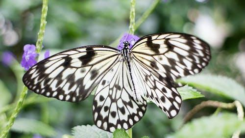 Fotos de stock gratuitas de efecto desenfocado, flores, macro, mariposa