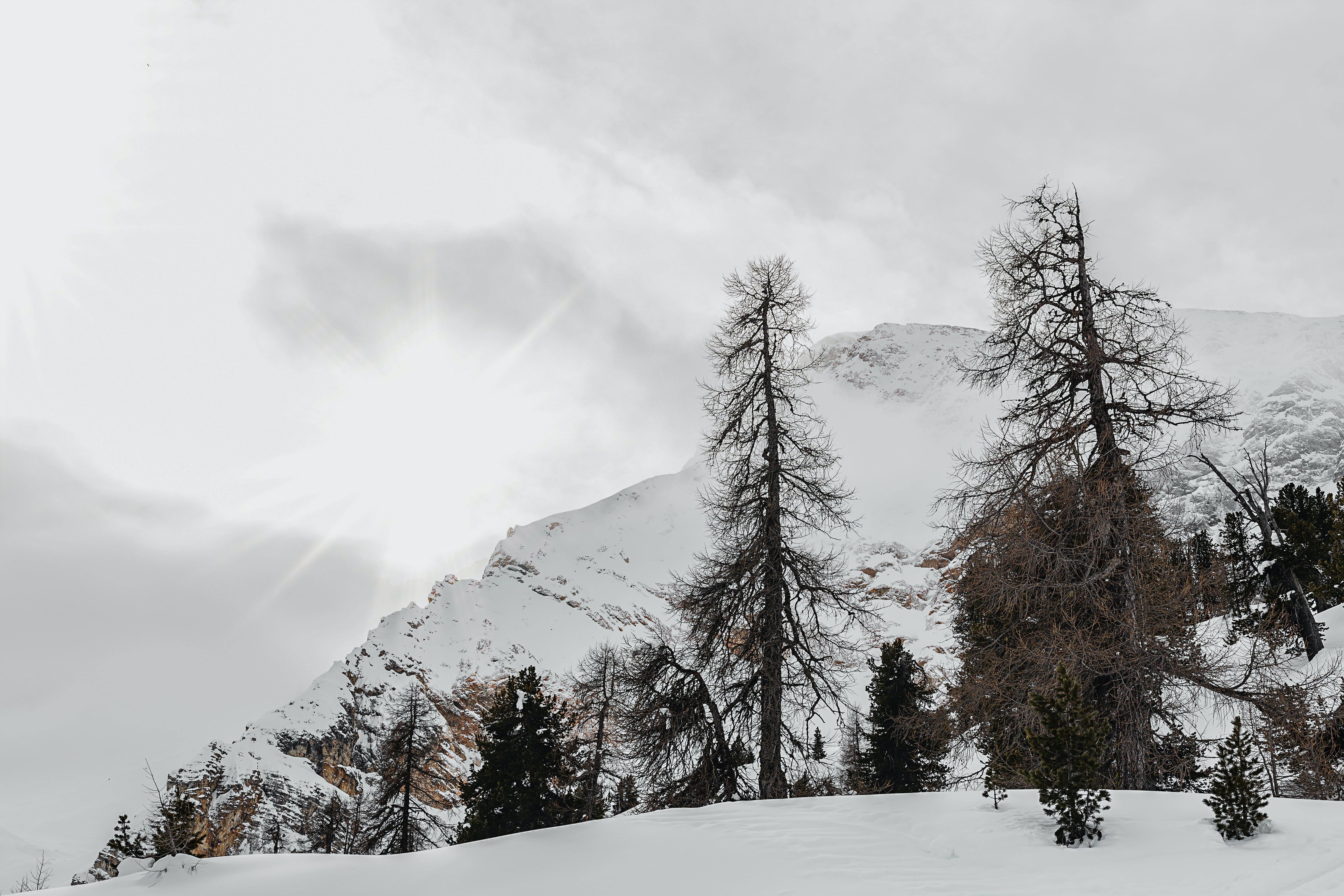 Black Withered Trees Across Snow-capped Mountain