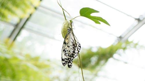 Fotos de stock gratuitas de efecto desenfocado, flor, macro, mariposa