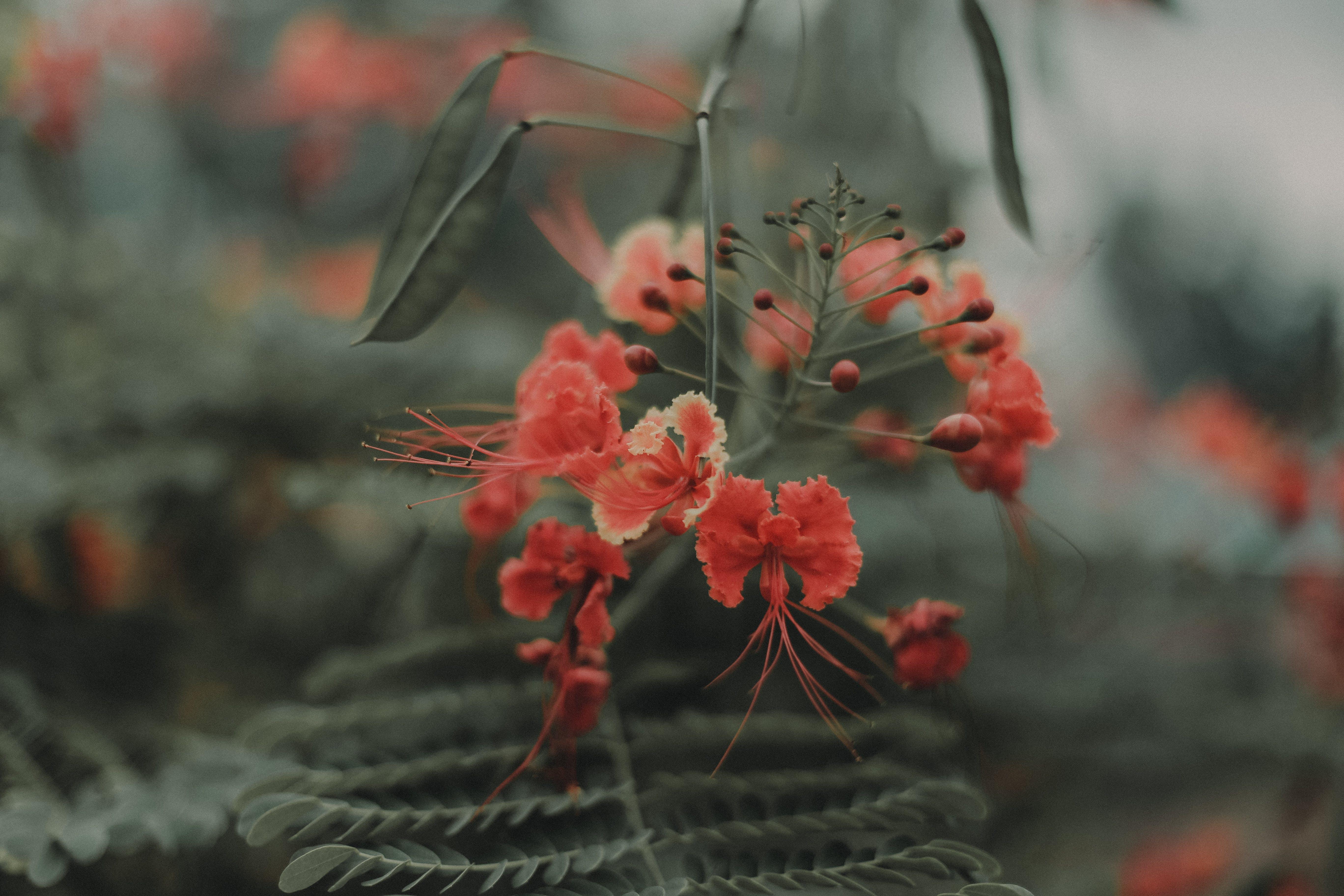 Imagine de stoc gratuită din floare, flori frumoase, înflorire