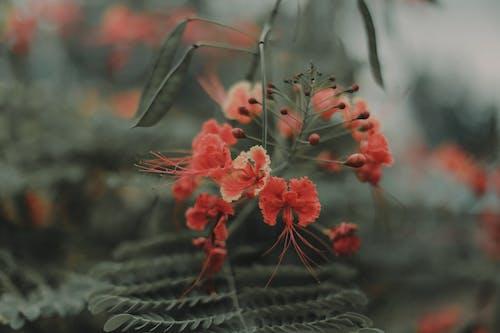 Gratis lagerfoto af blomst, smukke blomster, springe ud