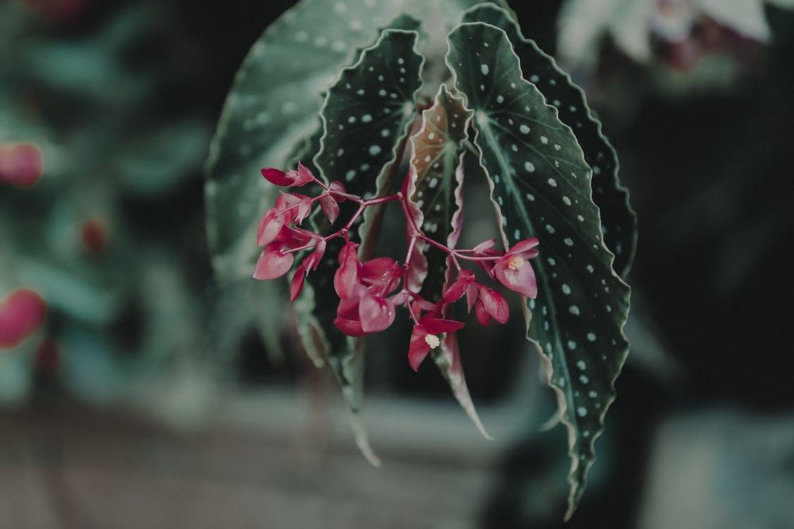 botanikus, elmosódott háttér, közelkép