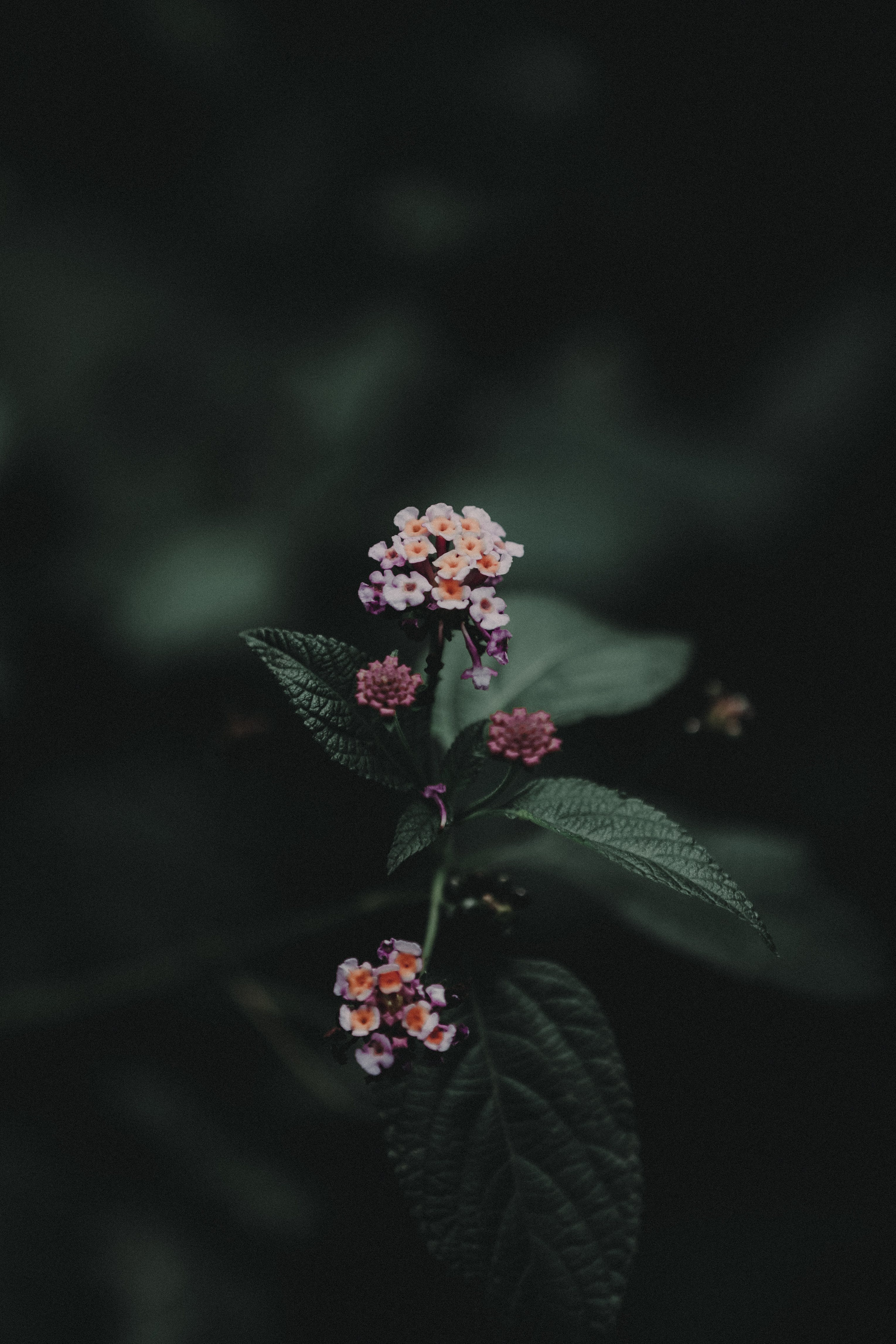 Low Light Photography of Pink and White Flowers