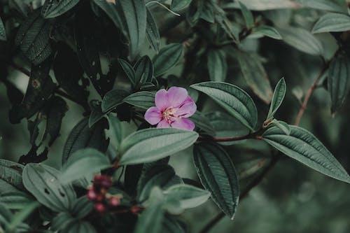 Gratis lagerfoto af blomst, blomstrende, delikat, flora