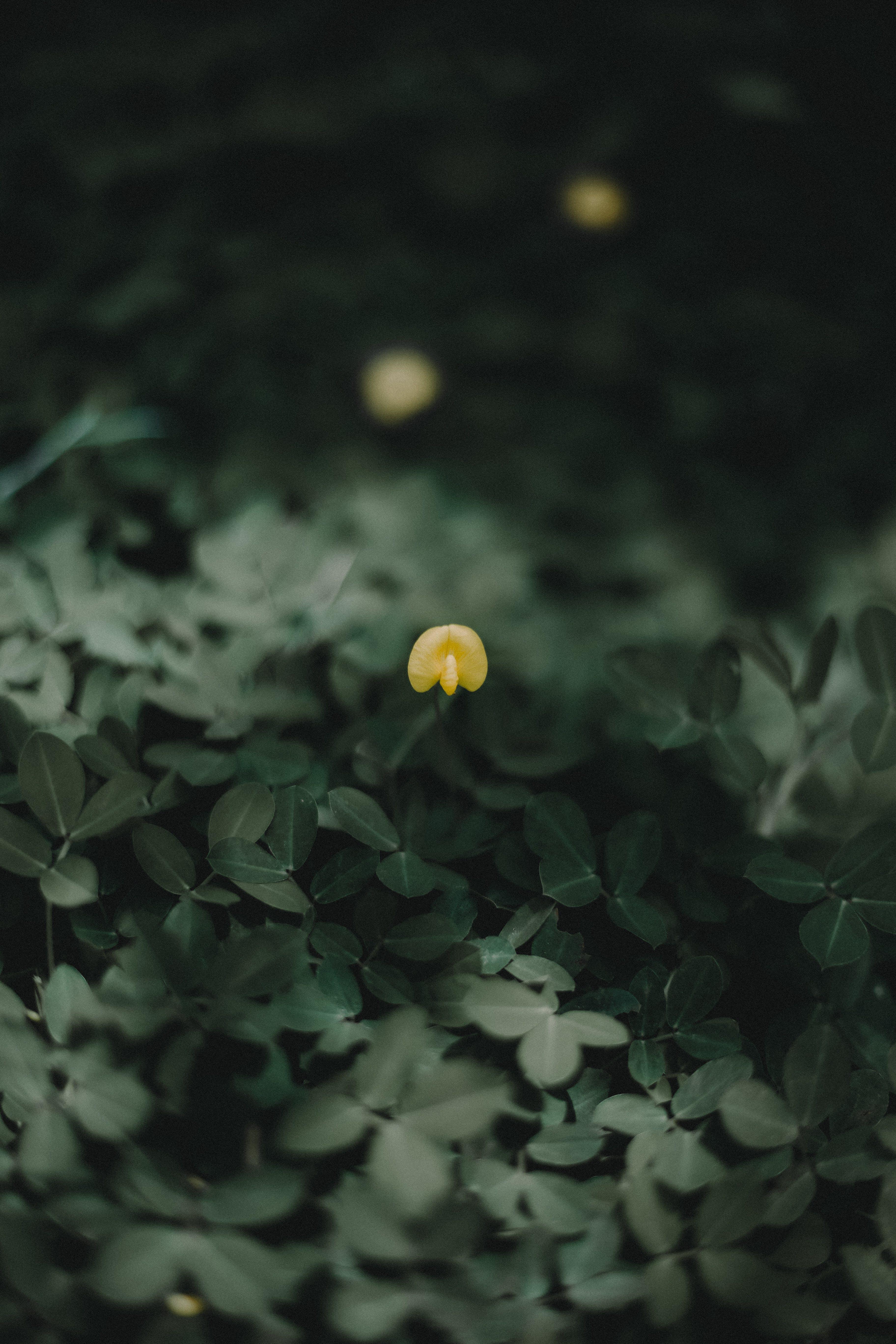Imagine de stoc gratuită din delicat, estompare, floare, floare galbenă
