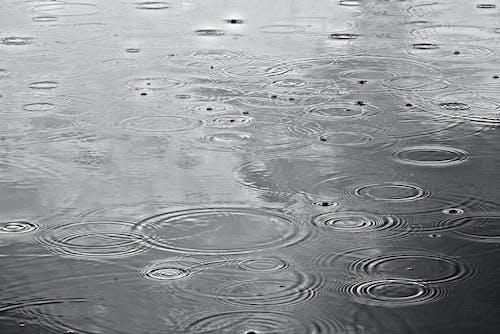 Free stock photo of circles, drop, pond, rain