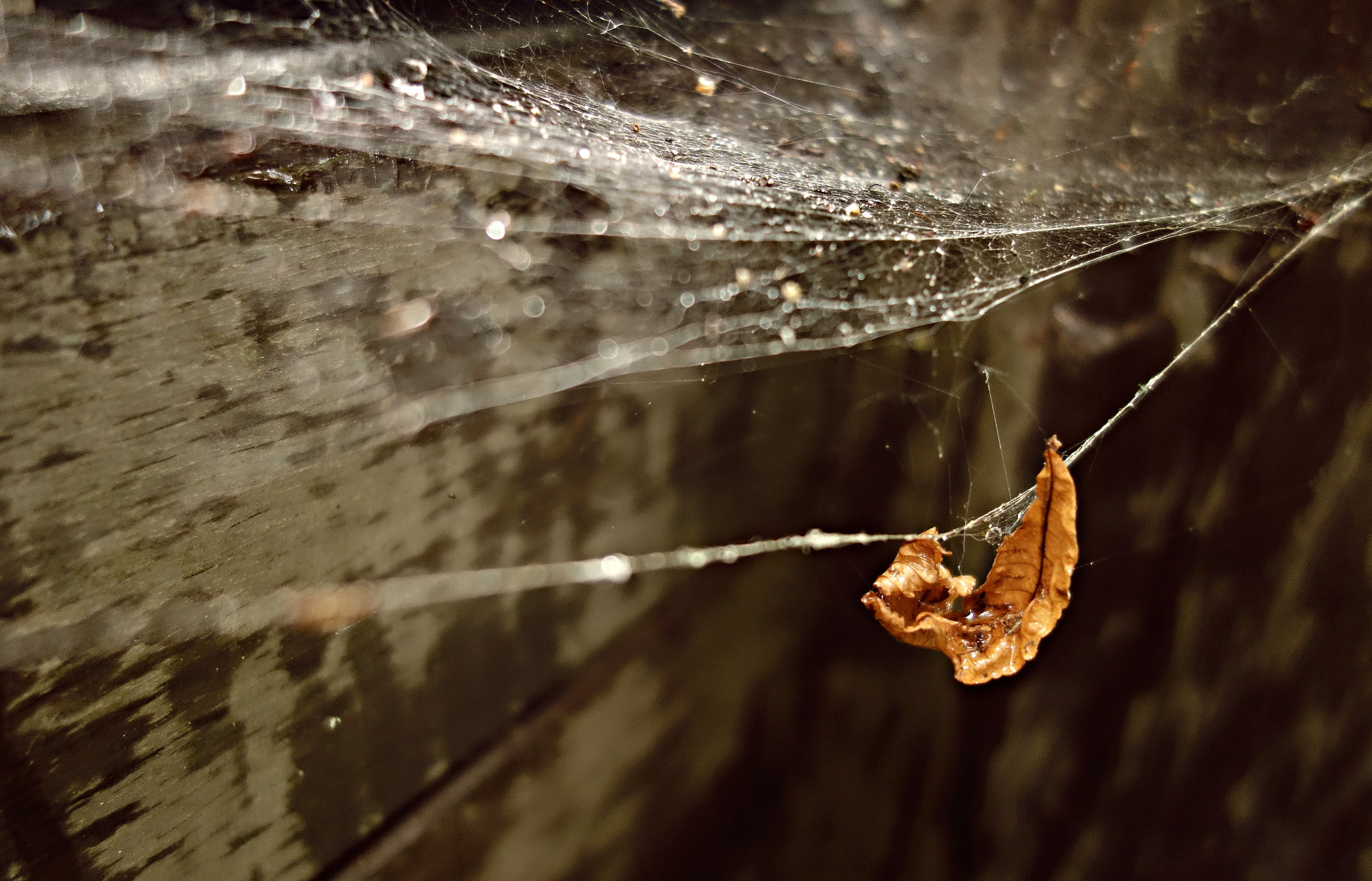 Free stock photo of web, drop, spider web, water drop