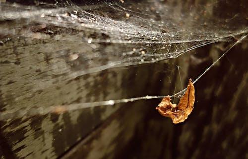 Free stock photo of bead, drop, gossamer, spider web