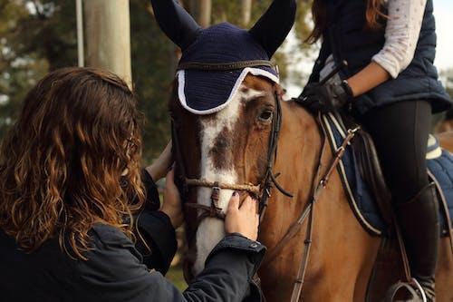 Základová fotografie zdarma na téma holka, hospodářská zvířata, kůň, savec