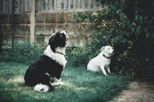 Ảnh lưu trữ miễn phí về ánh sáng ban ngày, cỏ, loài chó, lông thú
