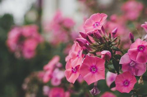 フラワーズ, フローラ, 咲く, 庭の花の無料の写真素材