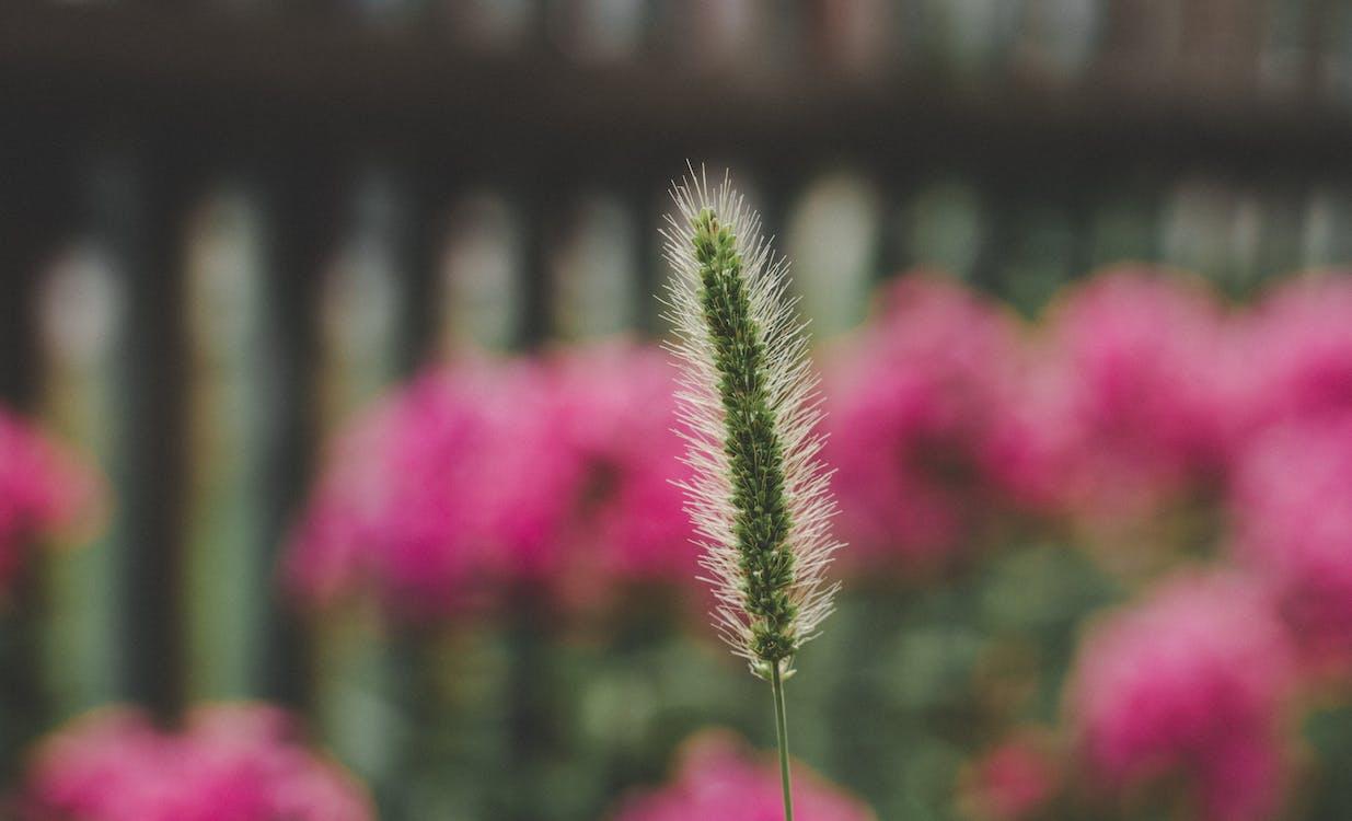kasvi, kasvikunta, kasvu