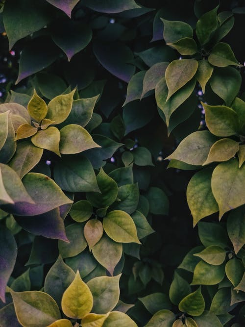 Gratis lagerfoto af grøn, plante, vækst