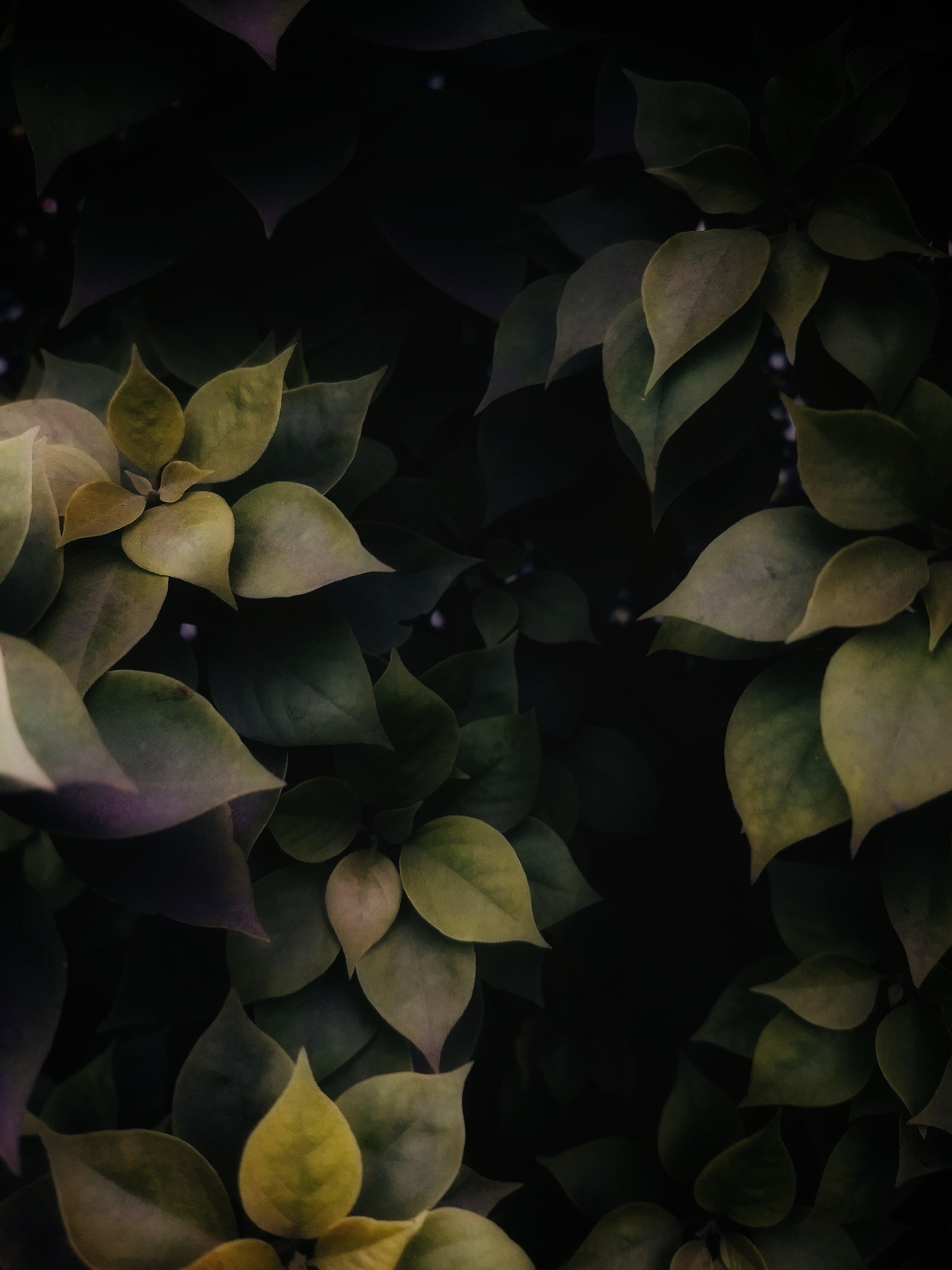 คลังภาพถ่ายฟรี ของ ต้นไม้, สีเขียว