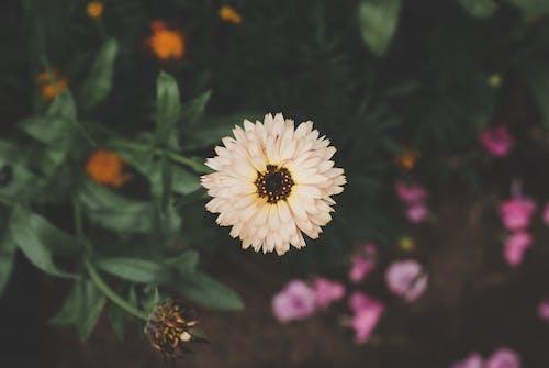 Gratis arkivbilde med blomster, blomsterblad, blomstre, farger
