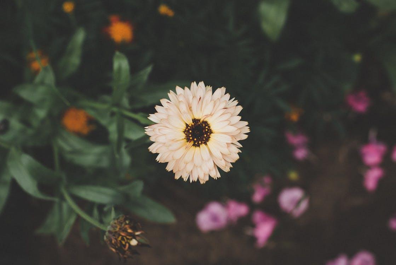 brillante, colores, crecimiento