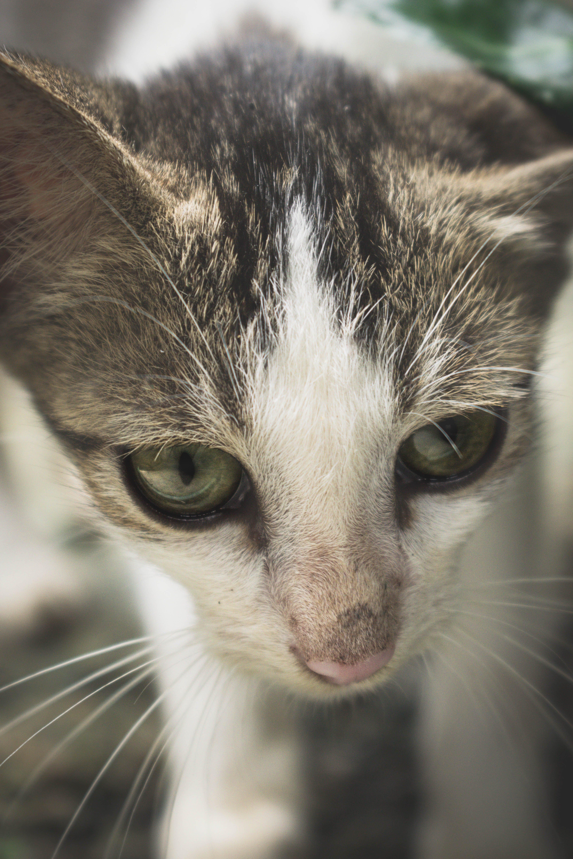 Free stock photo of animal, cat, macro photography, animal photography
