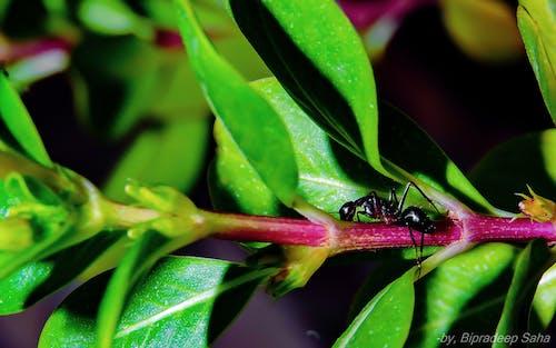 マクロ, 自然, 蟻の無料の写真素材